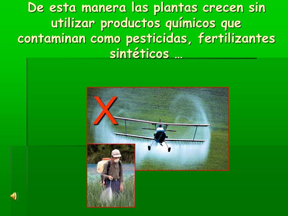 De esta manera las plantas crecen sin utilizar productos químicos que contaminan como pesticidas, fertilizantes sintéticos … X