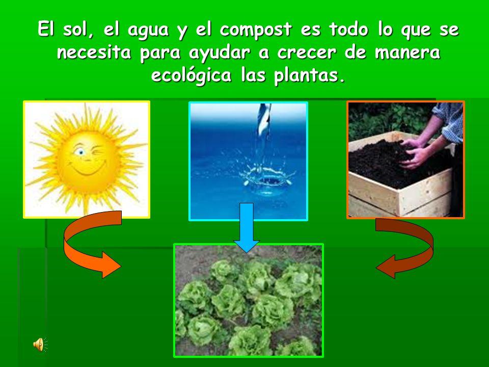 El sol, el agua y el compost es todo lo que se necesita para ayudar a crecer de manera ecológica las plantas.