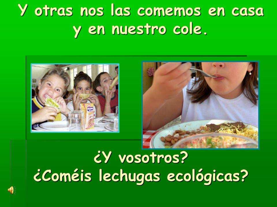 Y otras nos las comemos en casa y en nuestro cole. ¿Y vosotros? ¿Coméis lechugas ecológicas?