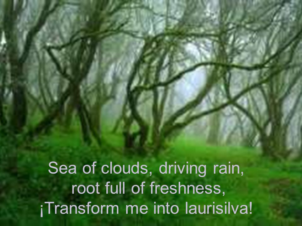 Sea of clouds, driving rain, root full of freshness, ¡Transform me into laurisilva!