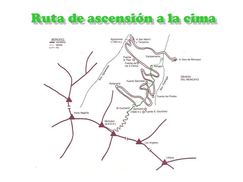 Haya Roble carballo Sorbus aucuparia mostajo Sauquero Arándano Acebo