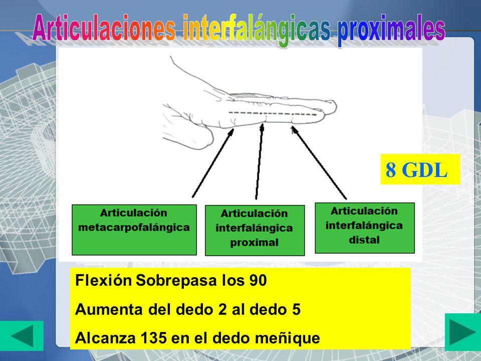 Flexión Sobrepasa los 90 Aumenta del dedo 2 al dedo 5 Alcanza 135 en el dedo meñique 8 GDL