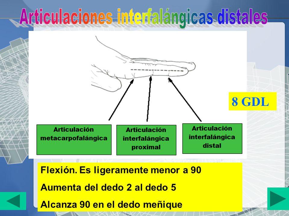 Flexión. Es ligeramente menor a 90 Aumenta del dedo 2 al dedo 5 Alcanza 90 en el dedo meñique 8 GDL