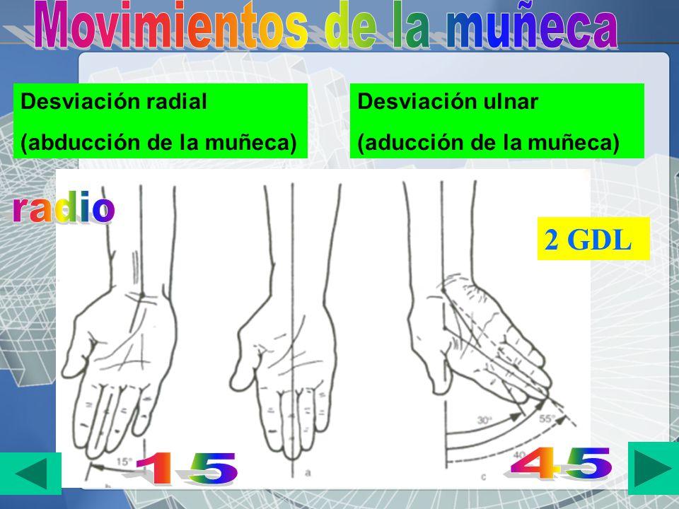 Desviación radial (abducción de la muñeca) Desviación ulnar (aducción de la muñeca) 2 GDL