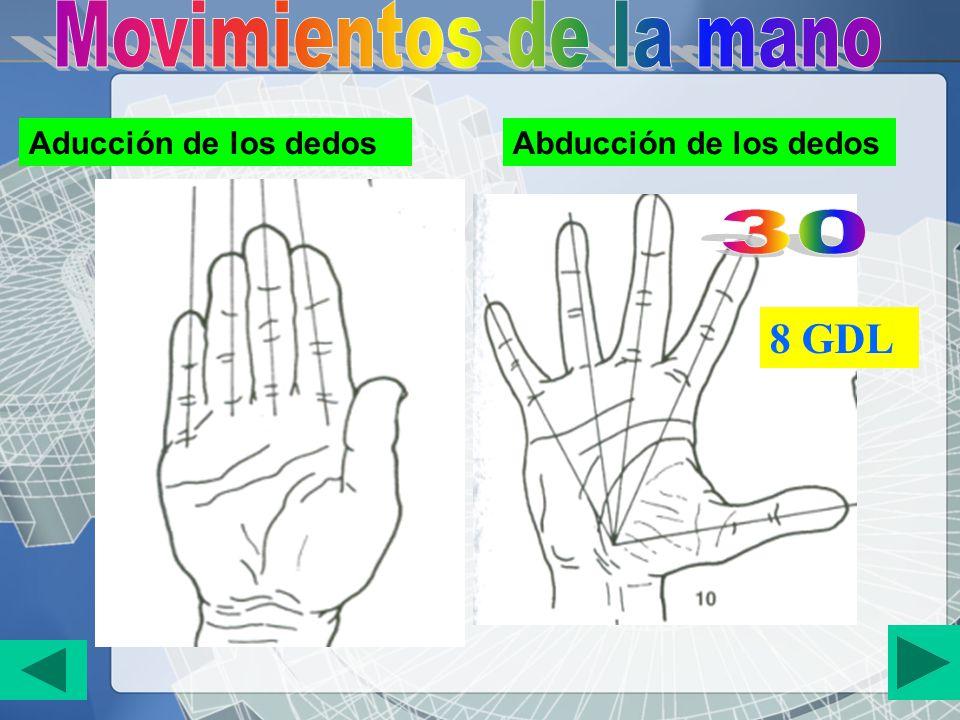 Aducción de los dedosAbducción de los dedos 8 GDL