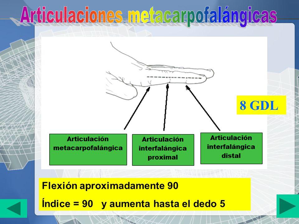 Flexión aproximadamente 90 Índice = 90 y aumenta hasta el dedo 5 8 GDL