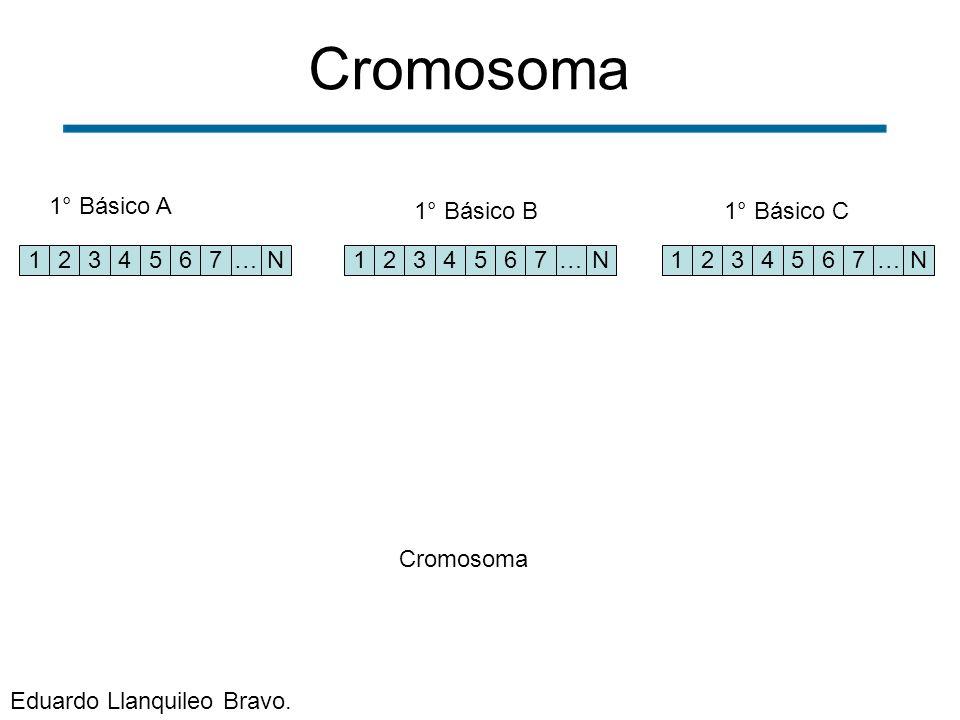 1234567…N 1234567…N1234567…N 1° Básico A 1° Básico B1° Básico C Cromosoma Eduardo Llanquileo Bravo.