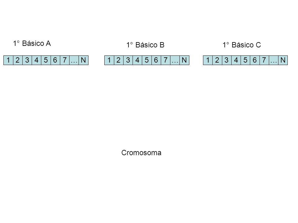 1234567…N 1234567…N1234567…N 1° Básico A 1° Básico B1° Básico C Cromosoma