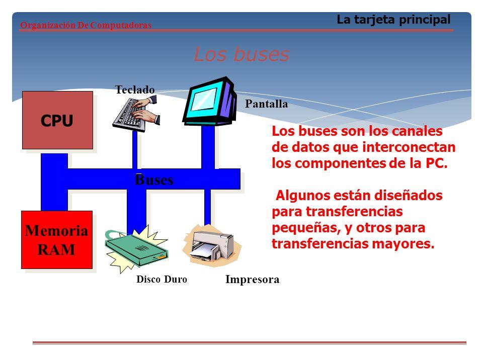 Los buses La tarjeta principal CPU Memoria RAM Memoria RAM Buses Teclado Pantalla Impresora Disco Duro Los buses son los canales de datos que intercon