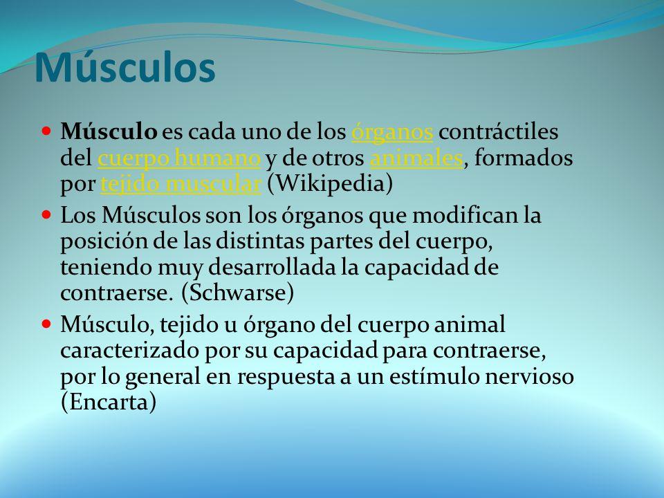 Músculos Músculo es cada uno de los órganos contráctiles del cuerpo humano y de otros animales, formados por tejido muscular (Wikipedia)órganoscuerpo