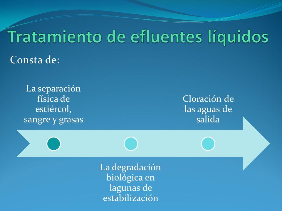 La separación física de estiércol, sangre y grasas La degradación biológica en lagunas de estabilización Cloración de las aguas de salida Consta de:
