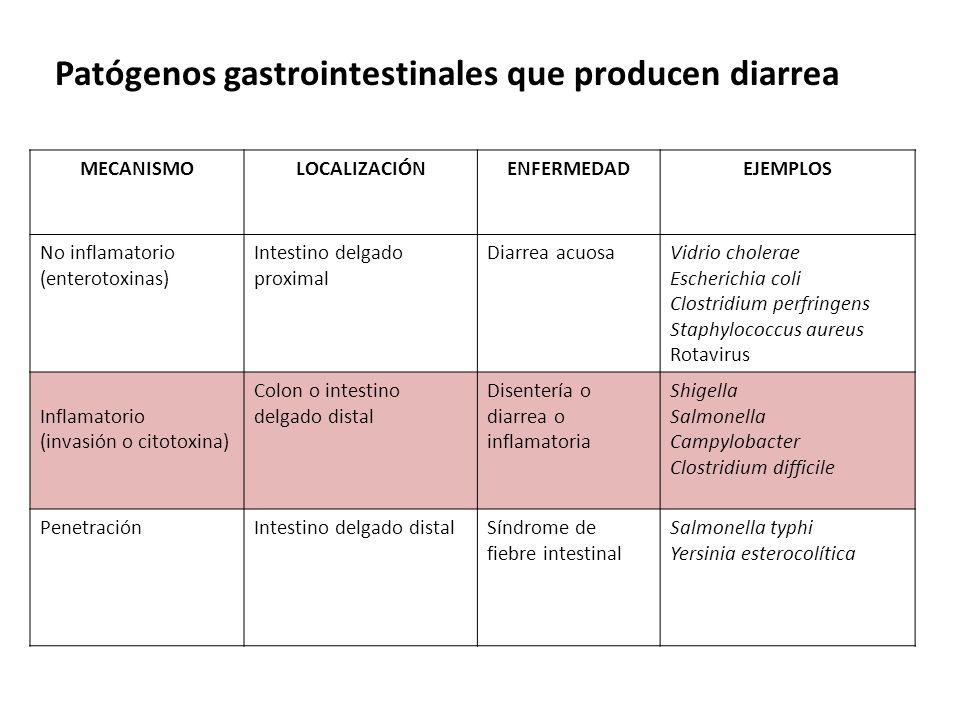 Patógenos gastrointestinales que producen diarrea MECANISMOLOCALIZACIÓNENFERMEDADEJEMPLOS No inflamatorio (enterotoxinas) Intestino delgado proximal D