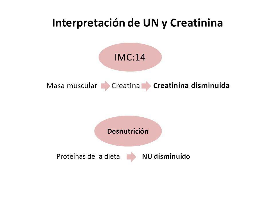 IMC:14 Interpretación de UN y Creatinina Proteínas de la dieta NU disminuido Masa muscular Creatina Creatinina disminuida Desnutrición