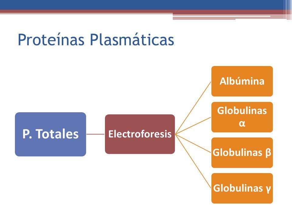 Proteínas Plasmáticas P. Totales Electroforesis Albúmina Globulinas α Globulinas βGlobulinas γ