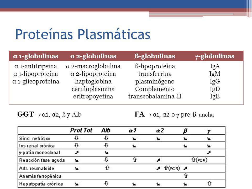 α 1-globulinasα 2-globulinasß-globulinas γ -globulinas α 1-antitripsina α 1-lipoproteína α 1-glicoproteína α 2-macroglobulina α 2-lipoproteína haptogl