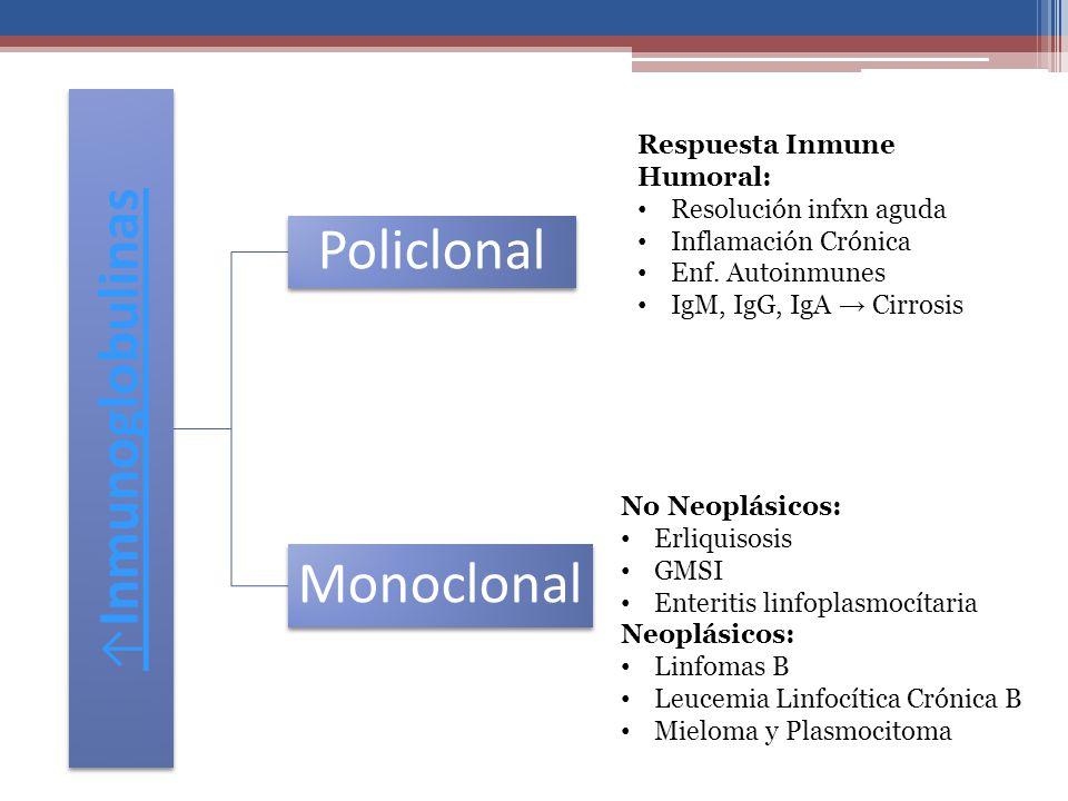 Inmunoglobulinas Policlonal Monoclonal Respuesta Inmune Humoral: Resolución infxn aguda Inflamación Crónica Enf. Autoinmunes IgM, IgG, IgA Cirrosis No