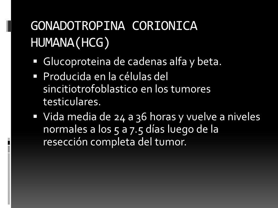 GONADOTROPINA CORIONICA HUMANA(HCG) Glucoproteina de cadenas alfa y beta. Producida en la células del sincitiotrofoblastico en los tumores testiculare
