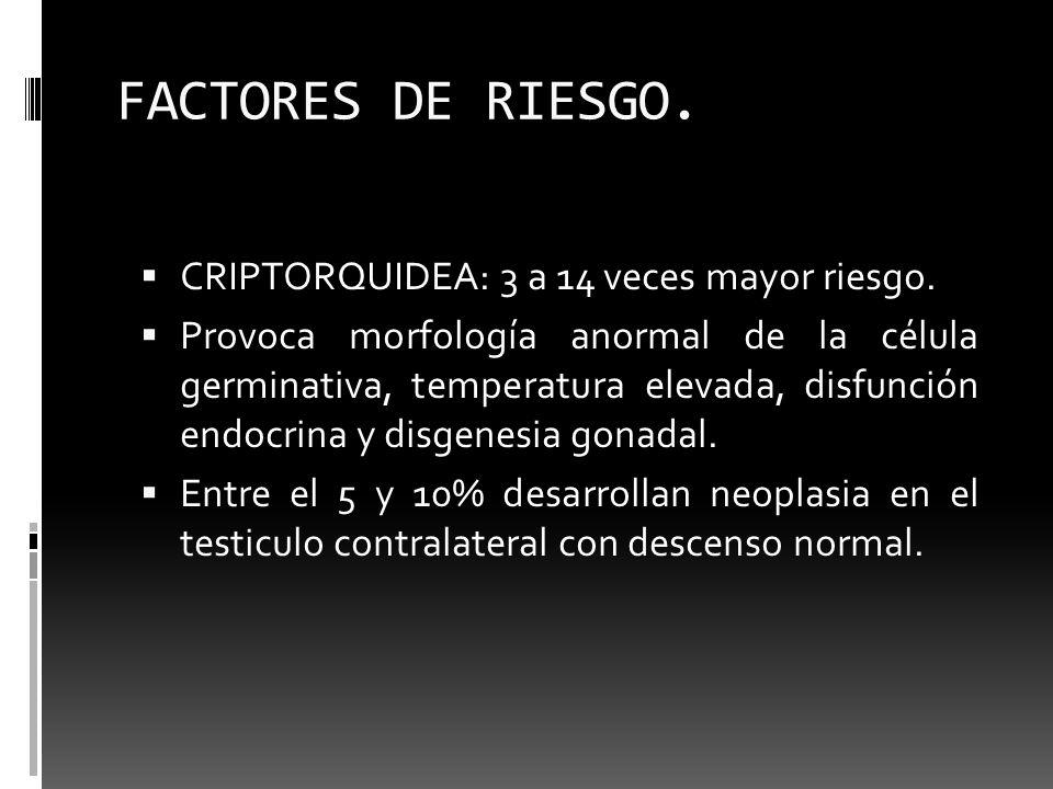 FACTORES DE RIESGO. CRIPTORQUIDEA: 3 a 14 veces mayor riesgo. Provoca morfología anormal de la célula germinativa, temperatura elevada, disfunción end