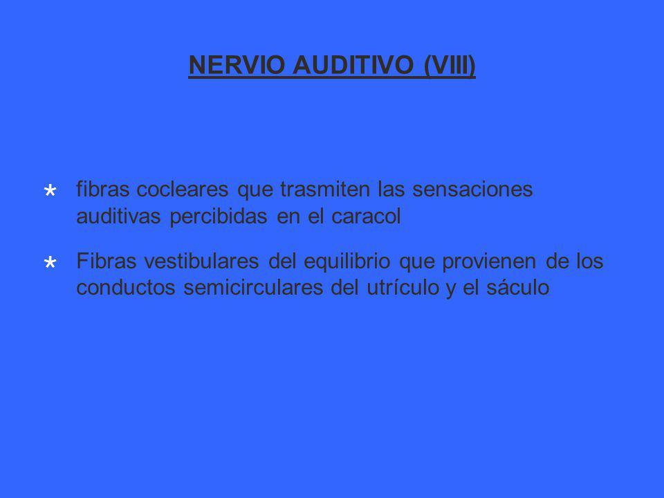 NERVIO AUDITIVO (VIII) fibras cocleares que trasmiten las sensaciones auditivas percibidas en el caracol Fibras vestibulares del equilibrio que provienen de los conductos semicirculares del utrículo y el sáculo