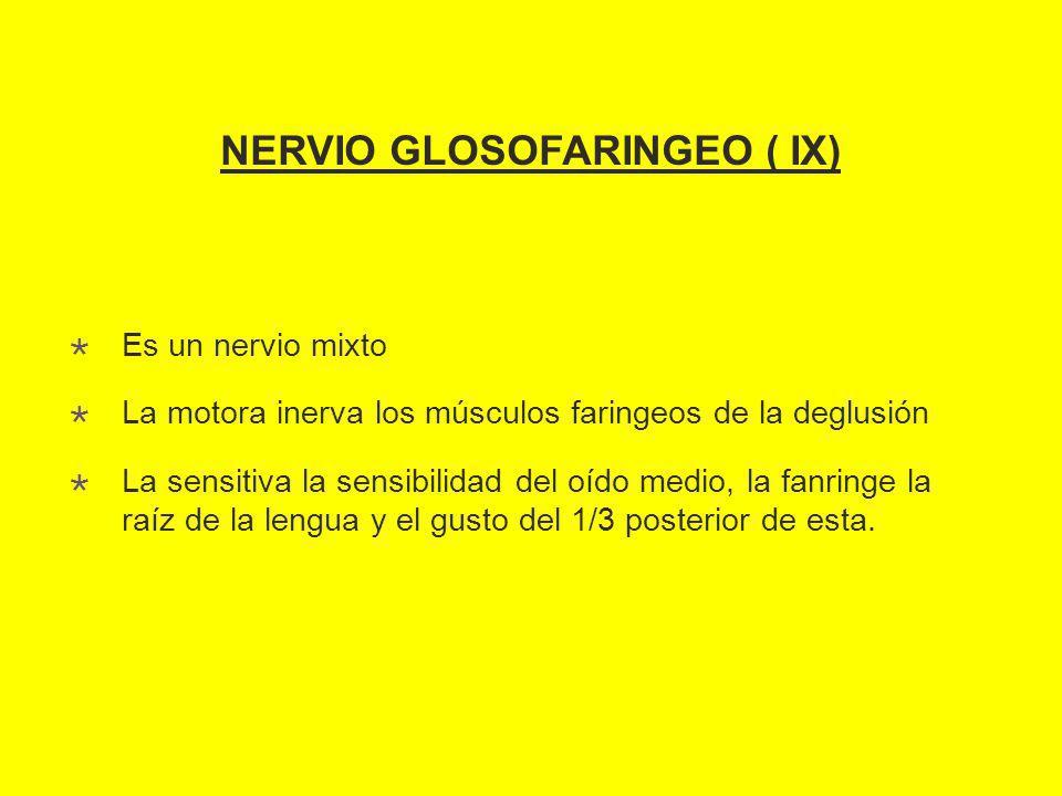 NERVIO GLOSOFARINGEO ( IX) Es un nervio mixto La motora inerva los músculos faringeos de la deglusión La sensitiva la sensibilidad del oído medio, la fanringe la raíz de la lengua y el gusto del 1/3 posterior de esta.
