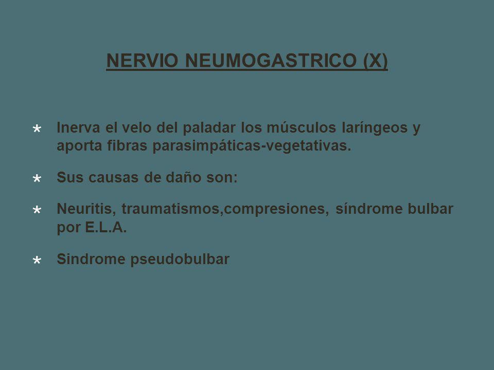 NERVIO NEUMOGASTRICO (X) Inerva el velo del paladar los músculos laríngeos y aporta fibras parasimpáticas-vegetativas.