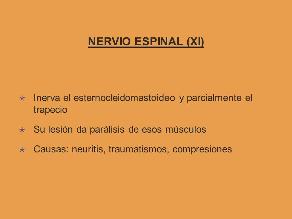 NERVIO ESPINAL (XI) Inerva el esternocleidomastoideo y parcialmente el trapecio Su lesión da parálisis de esos músculos Causas: neuritis, traumatismos, compresiones