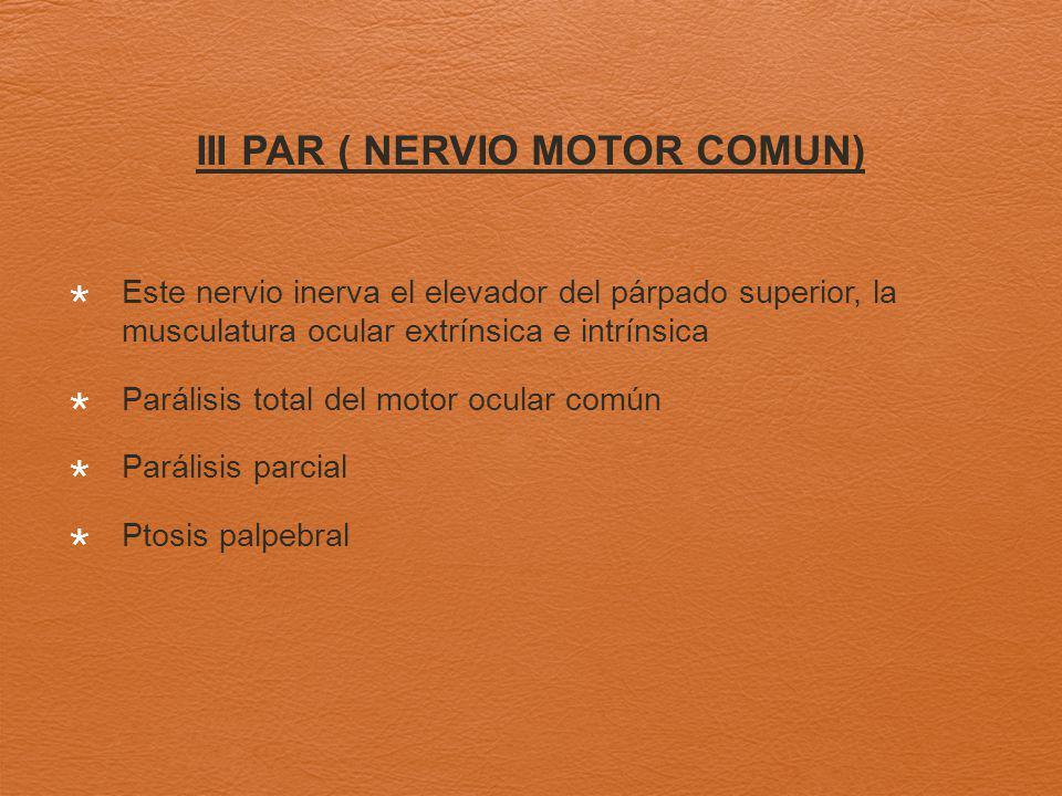 III PAR ( NERVIO MOTOR COMUN) Este nervio inerva el elevador del párpado superior, la musculatura ocular extrínsica e intrínsica Parálisis total del motor ocular común Parálisis parcial Ptosis palpebral