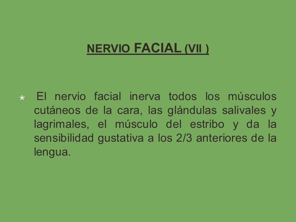 NERVIO FACIAL (VII ) El nervio facial inerva todos los músculos cutáneos de la cara, las glándulas salivales y lagrimales, el músculo del estribo y da la sensibilidad gustativa a los 2/3 anteriores de la lengua.