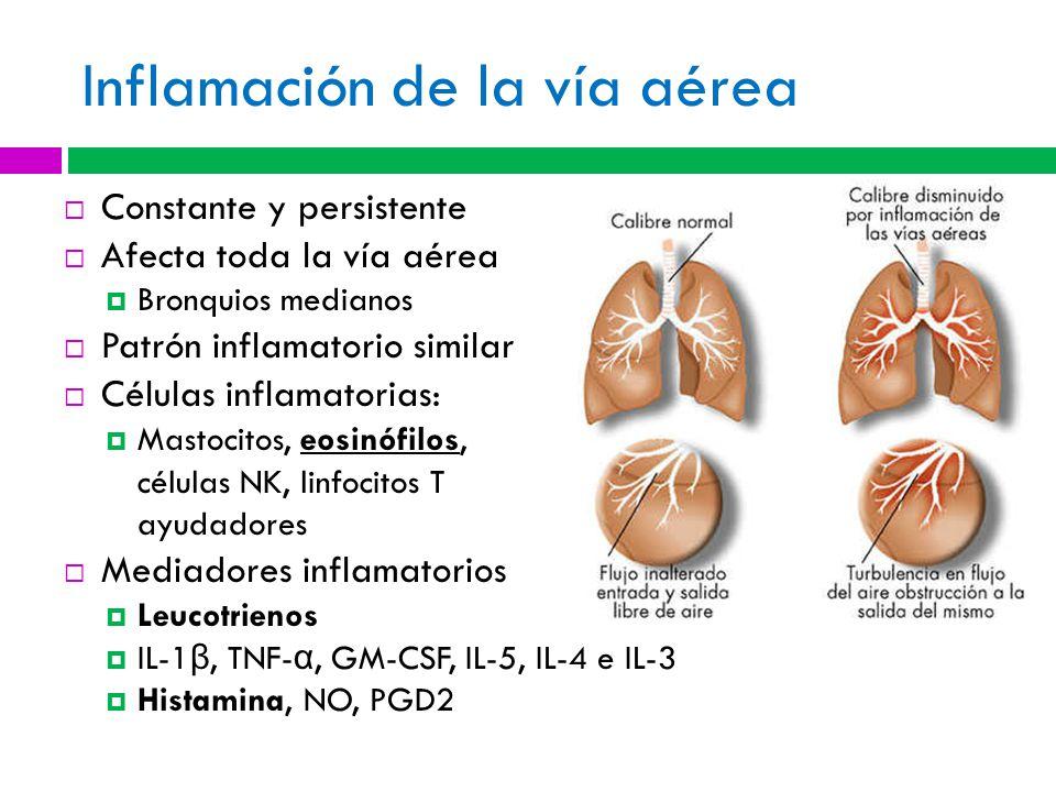 Inflamación de la vía aérea Constante y persistente Afecta toda la vía aérea Bronquios medianos Patrón inflamatorio similar Células inflamatorias: Mastocitos, eosinófilos, células NK, linfocitos T ayudadores Mediadores inflamatorios Leucotrienos IL-1 β, TNF- α, GM-CSF, IL-5, IL-4 e IL-3 Histamina, NO, PGD2