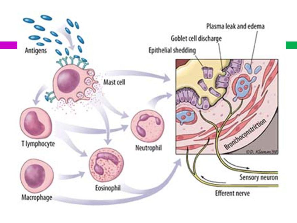 BROMURO DE IPRATROPIUM La escasa fracción que pasa a la sangre, va a tener una vida media de 3.5 horas.