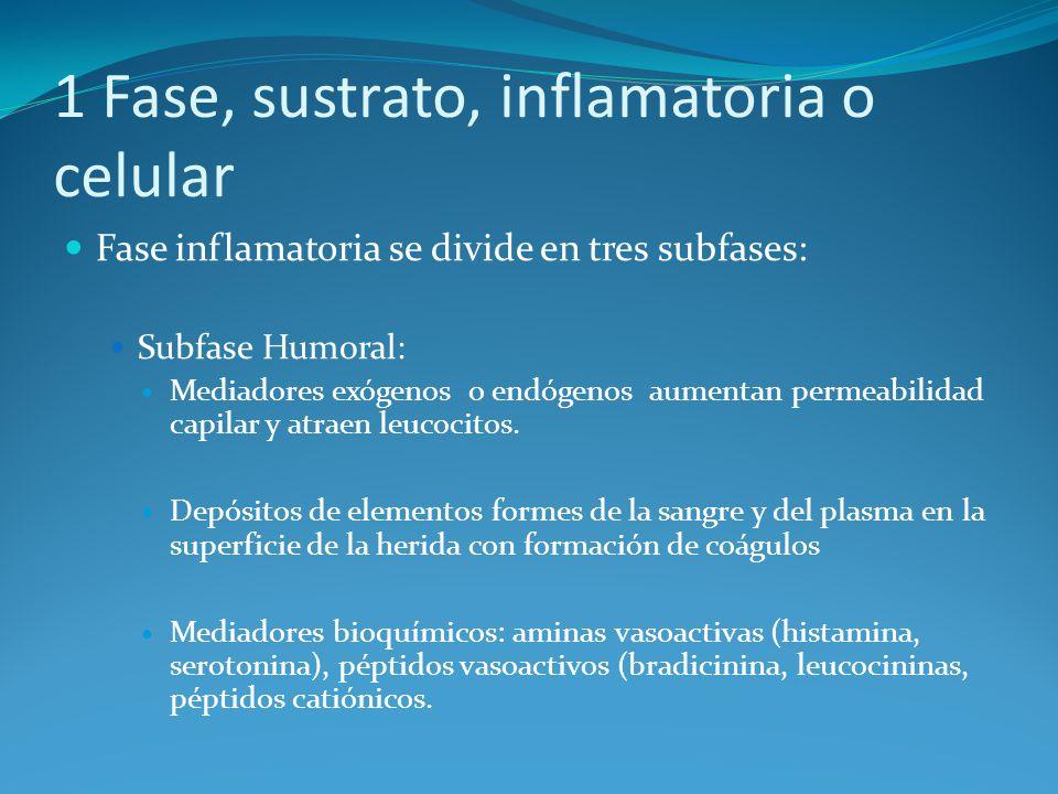 1 Fase, sustrato, inflamatoria o celular Fase inflamatoria se divide en tres subfases: Subfase Humoral: Mediadores exógenos o endógenos aumentan permeabilidad capilar y atraen leucocitos.