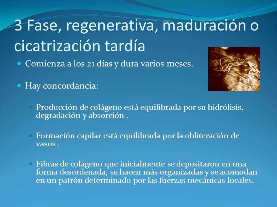 3 Fase, regenerativa, maduración o cicatrización tardía Comienza a los 21 días y dura varios meses.