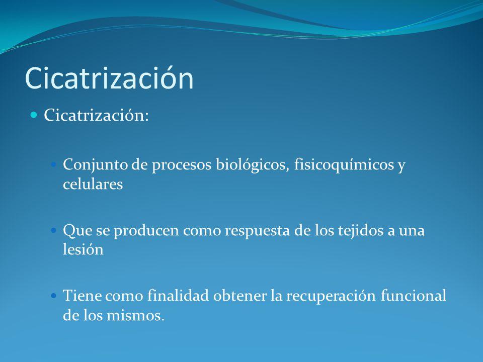 Cicatrización El tegumento (piel y mucosa): Mejor medio de protección en los animales.