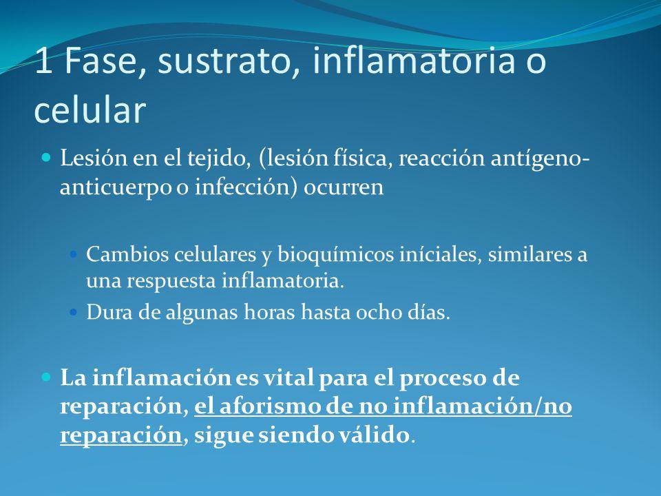1 Fase, sustrato, inflamatoria o celular Lesión en el tejido, (lesión física, reacción antígeno- anticuerpo o infección) ocurren Cambios celulares y bioquímicos iníciales, similares a una respuesta inflamatoria.