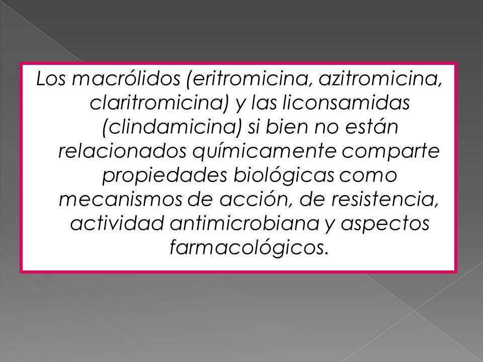 Los macrólidos (eritromicina, azitromicina, claritromicina) y las liconsamidas (clindamicina) si bien no están relacionados químicamente comparte prop