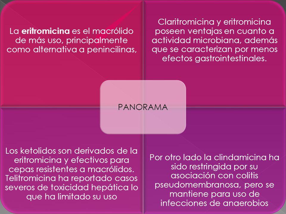 . La eritromicina es el macrólido de más uso, principalmente como alternativa a penincilinas, Claritromicina y eritromicina poseen ventajas en cuanto