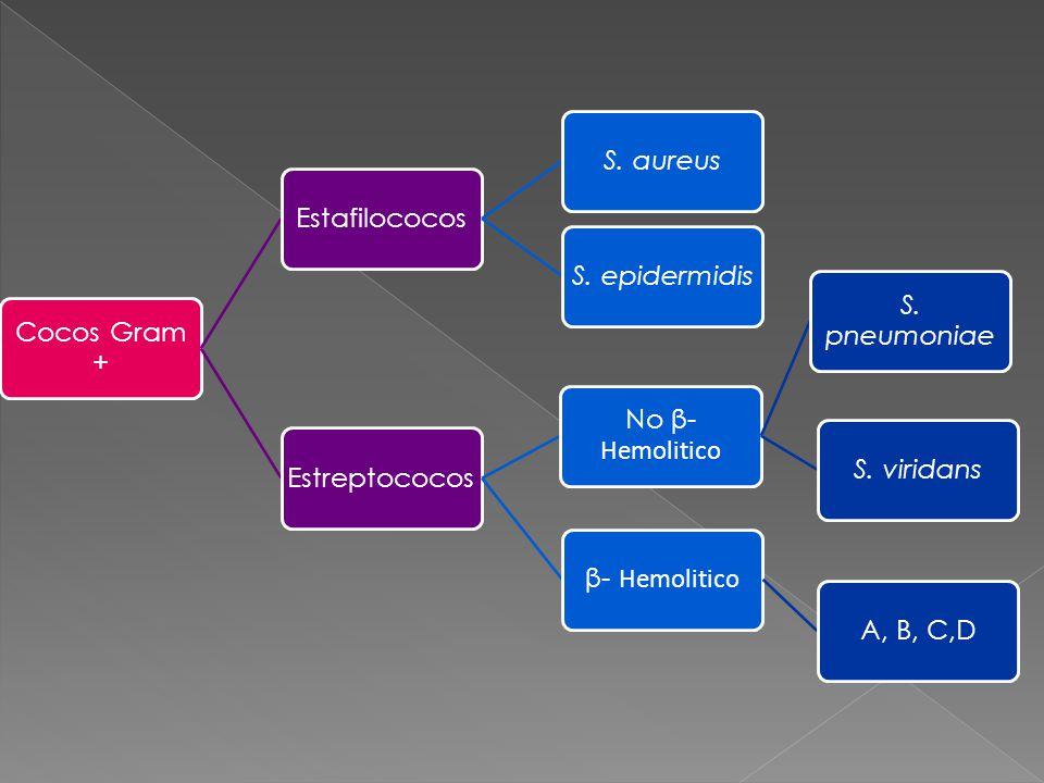 Cocos Gram + EstafilococosS. aureusS. epidermidisEstreptococos β- Hemolitico A, B, C,D No β- Hemolitico S. pneumoniae S. viridans