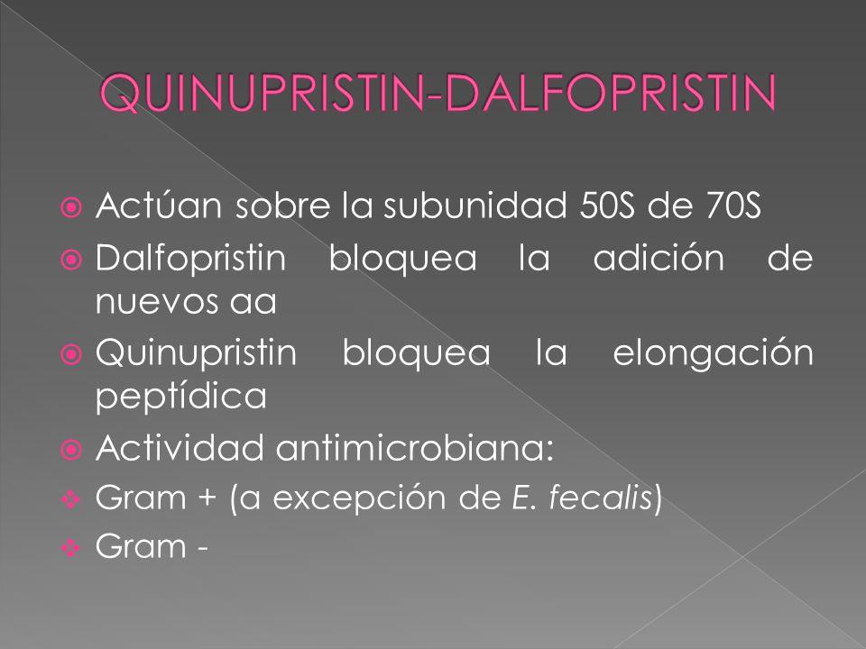 Actúan sobre la subunidad 50S de 70S Dalfopristin bloquea la adición de nuevos aa Quinupristin bloquea la elongación peptídica Actividad antimicrobian
