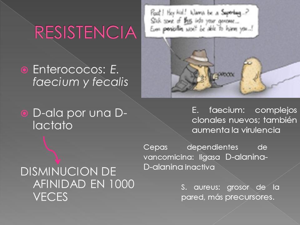Enterococos: E. faecium y fecalis D-ala por una D- lactato DISMINUCION DE AFINIDAD EN 1000 VECES E. faecium: complejos clonales nuevos; también aument