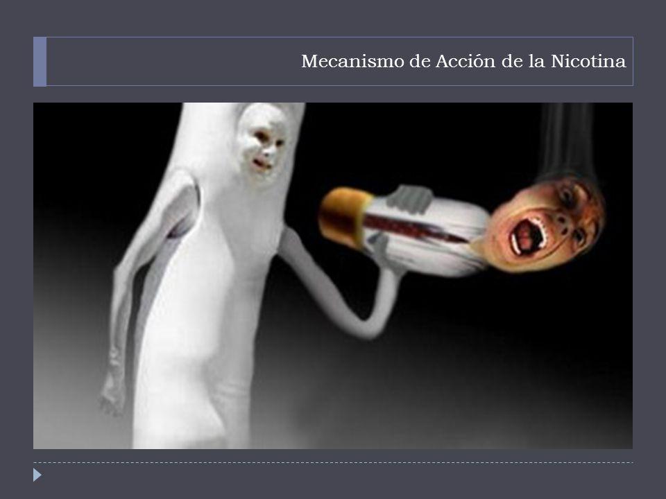 Mecanismo de Acción de la Nicotina