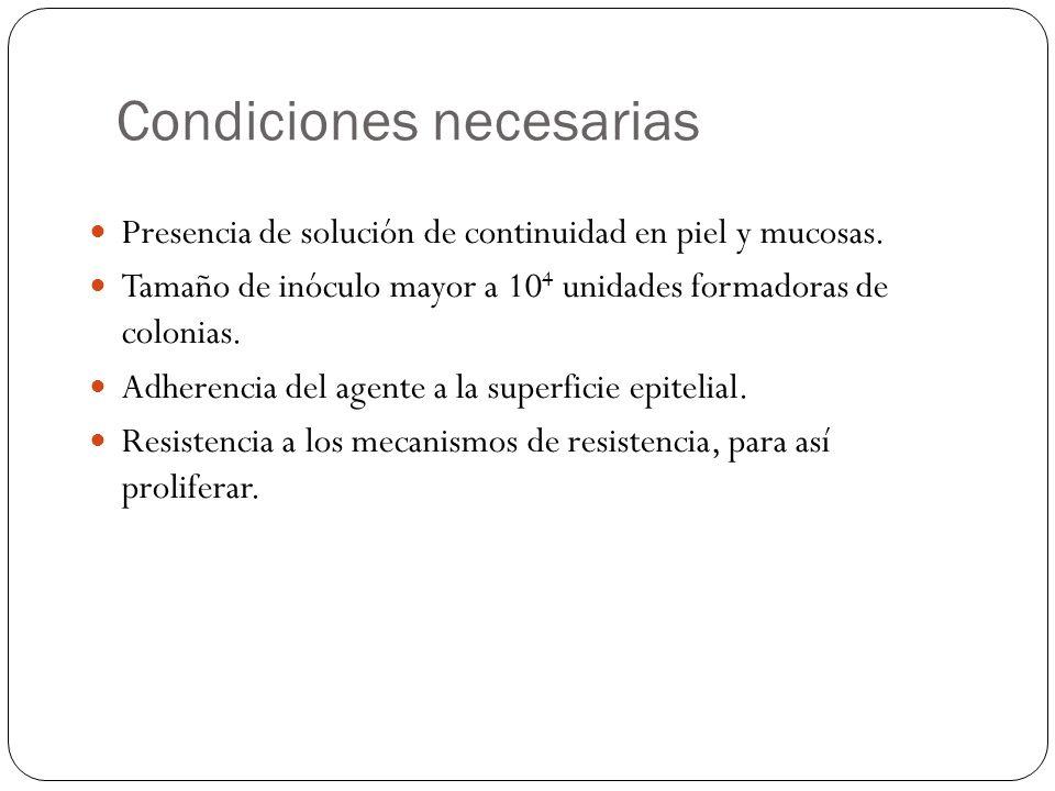 Condiciones necesarias Presencia de solución de continuidad en piel y mucosas. Tamaño de inóculo mayor a 10 4 unidades formadoras de colonias. Adheren