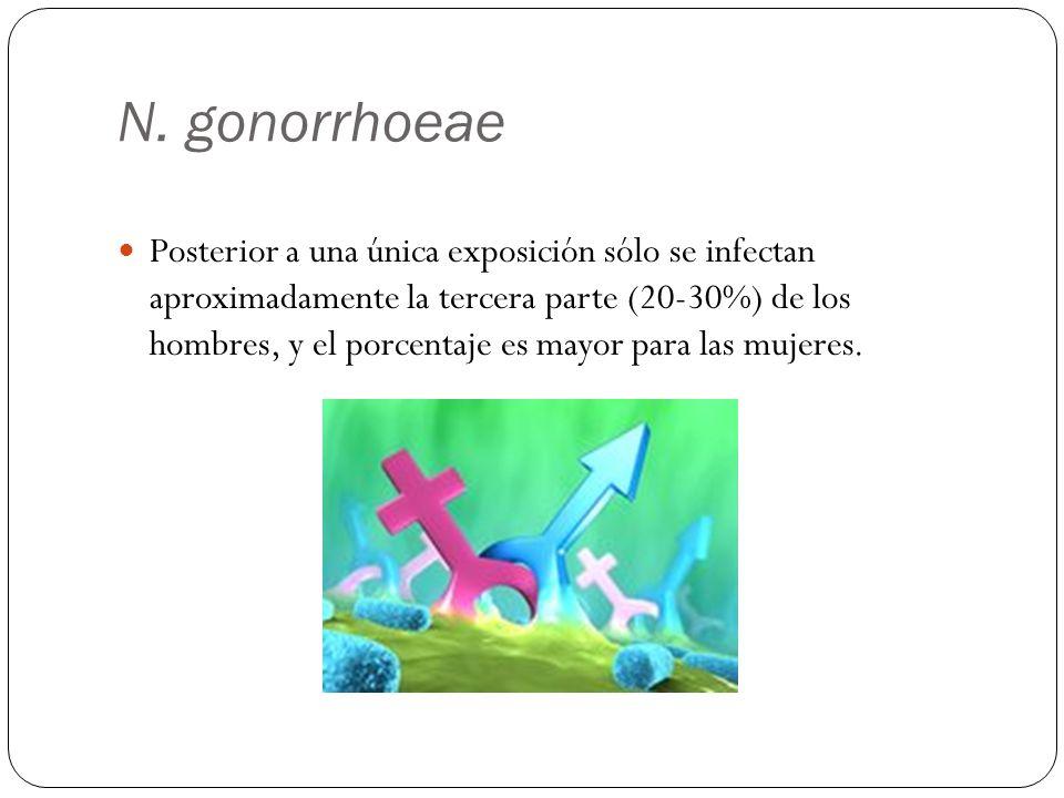 N. gonorrhoeae Posterior a una única exposición sólo se infectan aproximadamente la tercera parte (20-30%) de los hombres, y el porcentaje es mayor pa