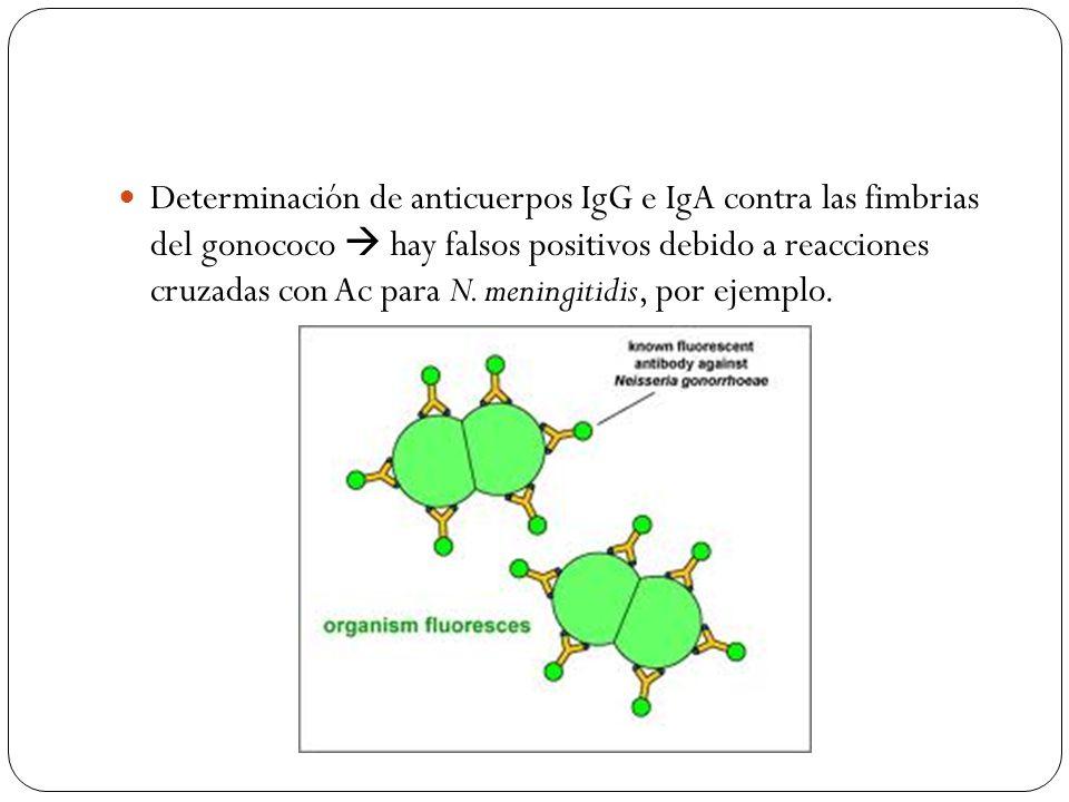 Determinación de anticuerpos IgG e IgA contra las fimbrias del gonococo hay falsos positivos debido a reacciones cruzadas con Ac para N. meningitidis,