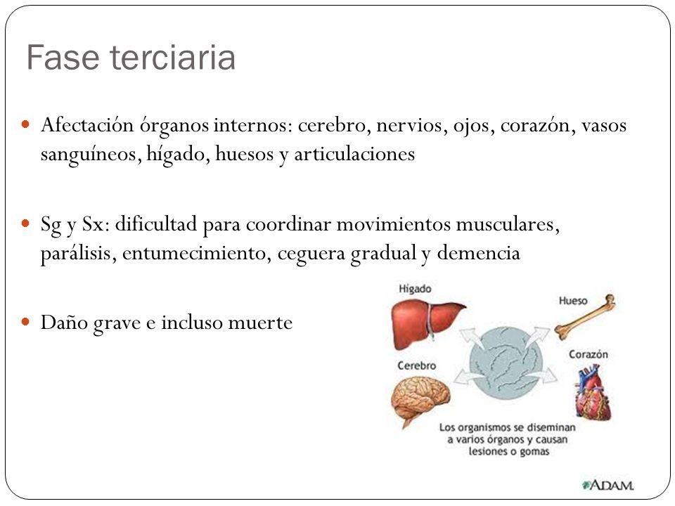 Fase terciaria Afectación órganos internos: cerebro, nervios, ojos, corazón, vasos sanguíneos, hígado, huesos y articulaciones Sg y Sx: dificultad par