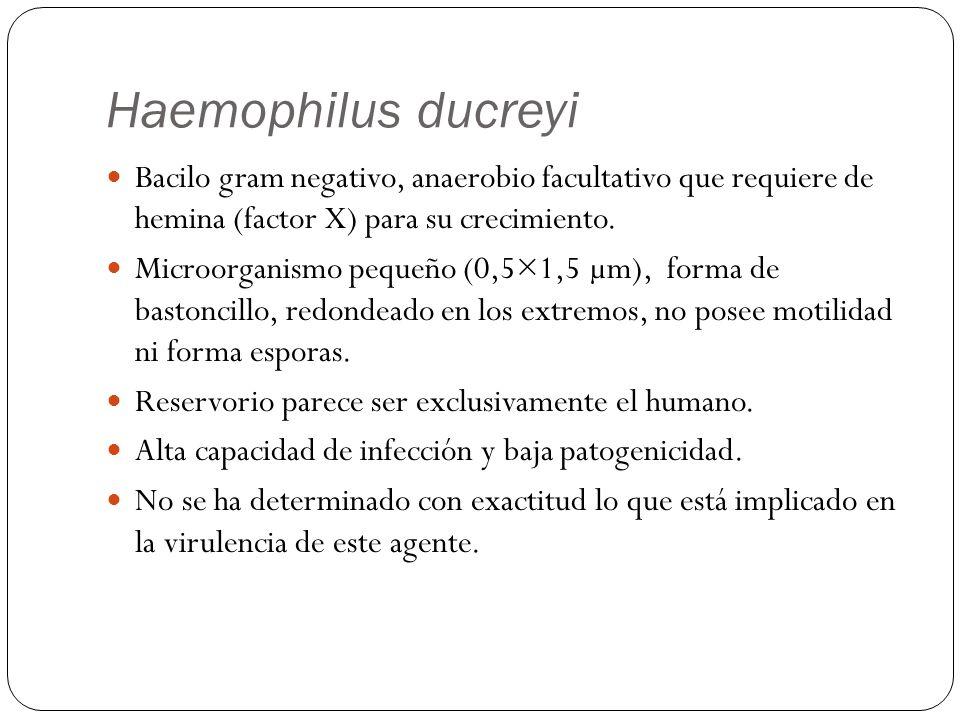 Haemophilus ducreyi Bacilo gram negativo, anaerobio facultativo que requiere de hemina (factor X) para su crecimiento. Microorganismo pequeño (0,5×1,5