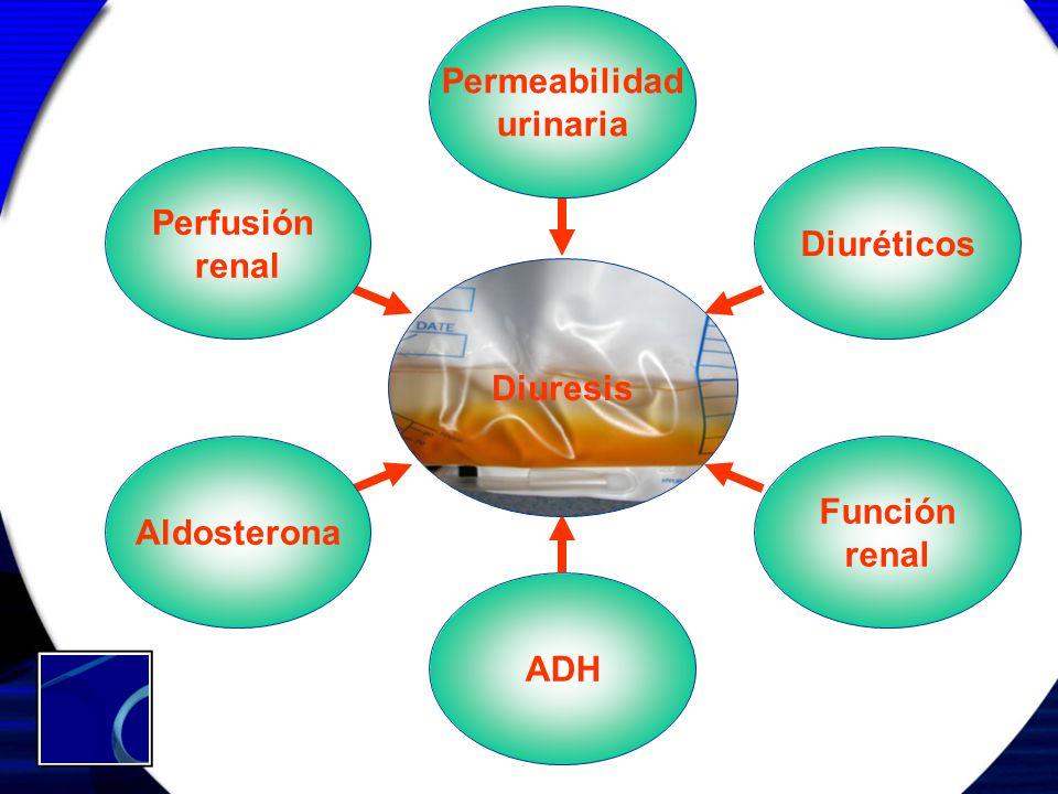 ADH Diuresis Perfusión renal Permeabilidad urinaria Diuréticos Función renal Aldosterona