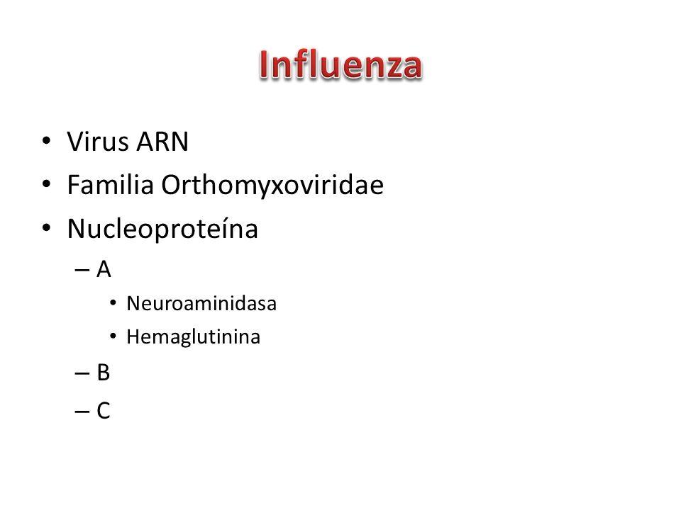 Virus ARN Familia Orthomyxoviridae Nucleoproteína – A Neuroaminidasa Hemaglutinina – B – C