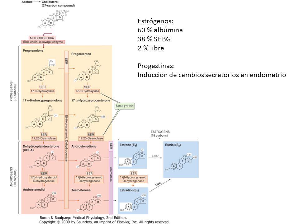 Estrógenos: 60 % albúmina 38 % SHBG 2 % libre Progestinas: Inducción de cambios secretorios en endometrio