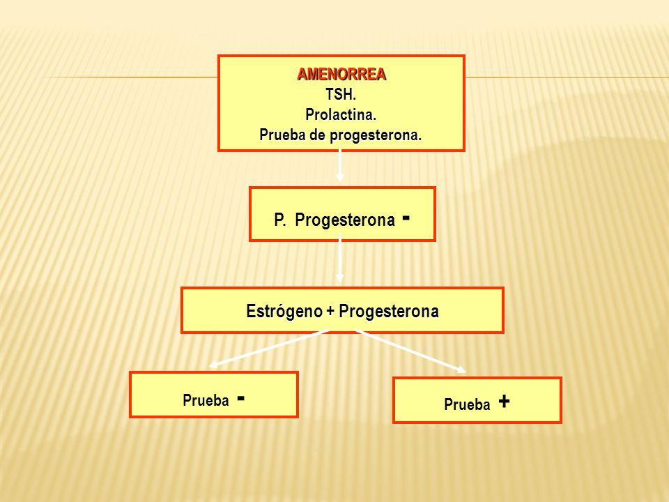 AMENORREATSH.Prolactina. Prueba de progesterona. P. Progesterona - Estrógeno + Progesterona Prueba - Prueba +