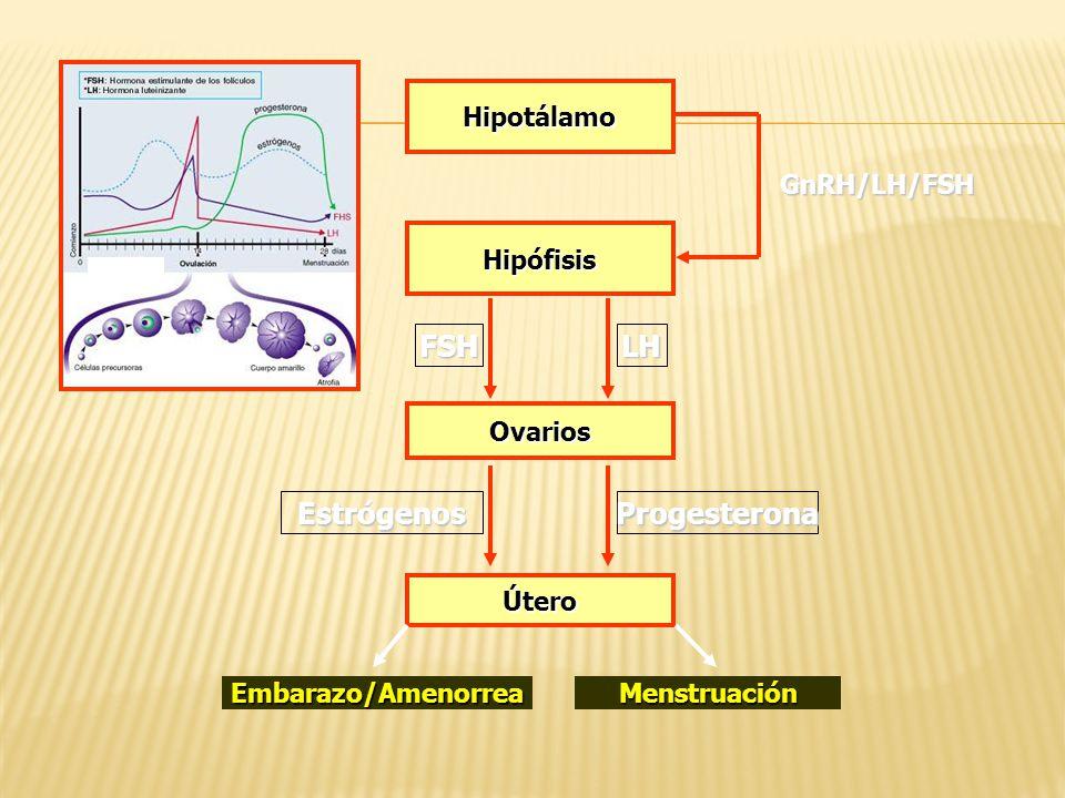 Hipotálamo Hipófisis Ovarios Útero GnRH/LH/FSH LHFSH ProgesteronaEstrógenos MenstruaciónEmbarazo/Amenorrea